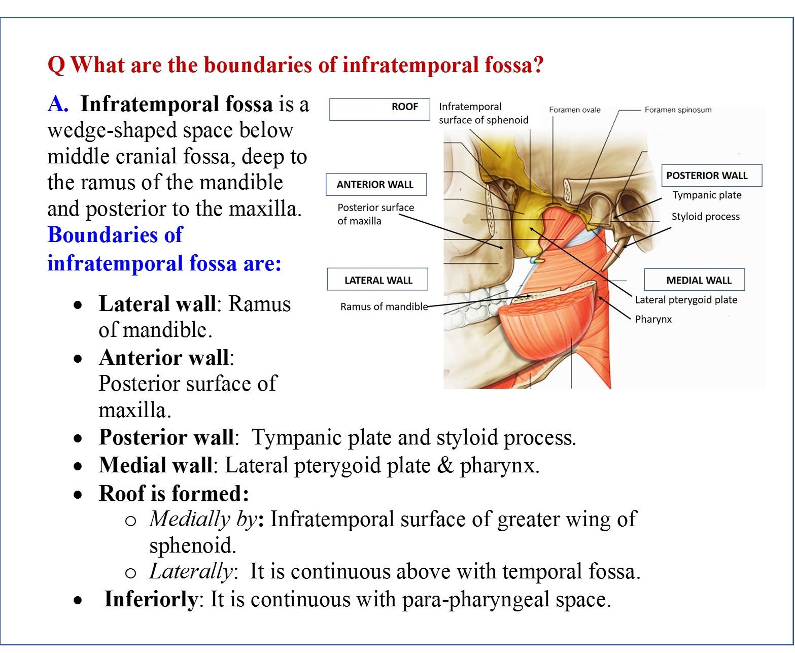 Wunderbar Infratemporal Fossa Anatomy Ideen Menschliche Anatomie
