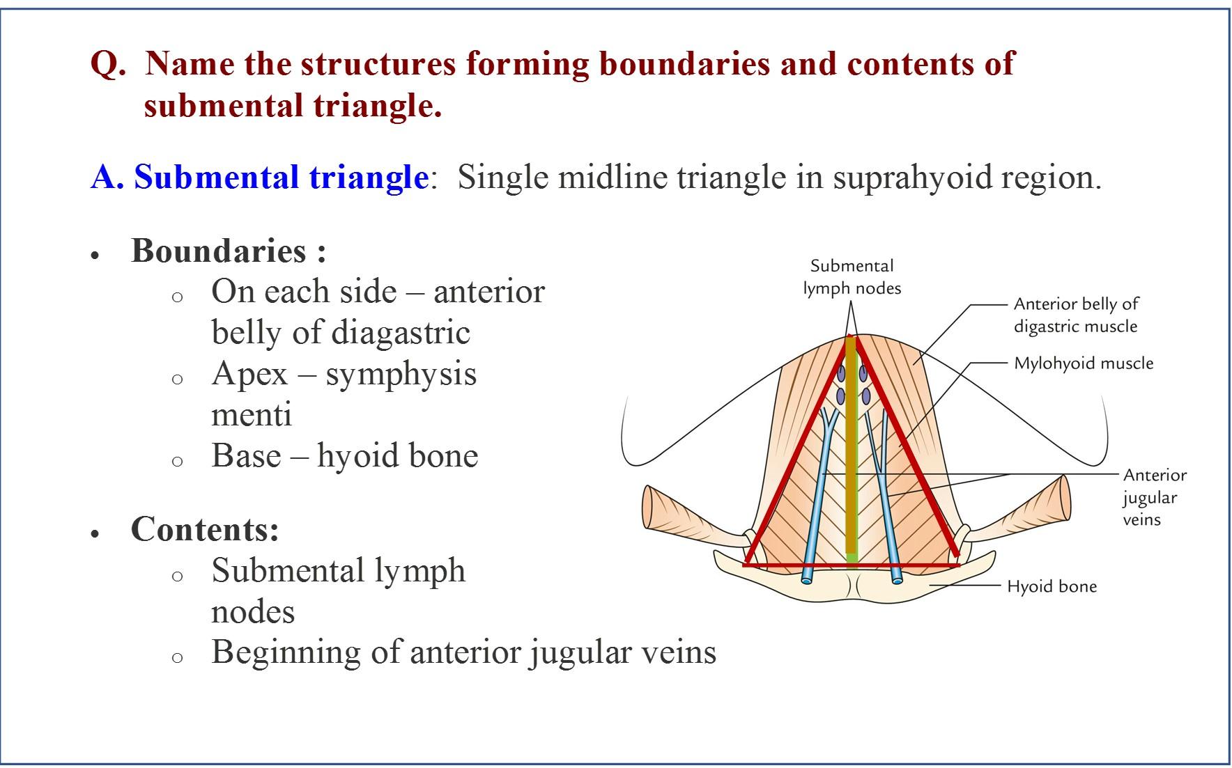 Posterior triangle anatomy