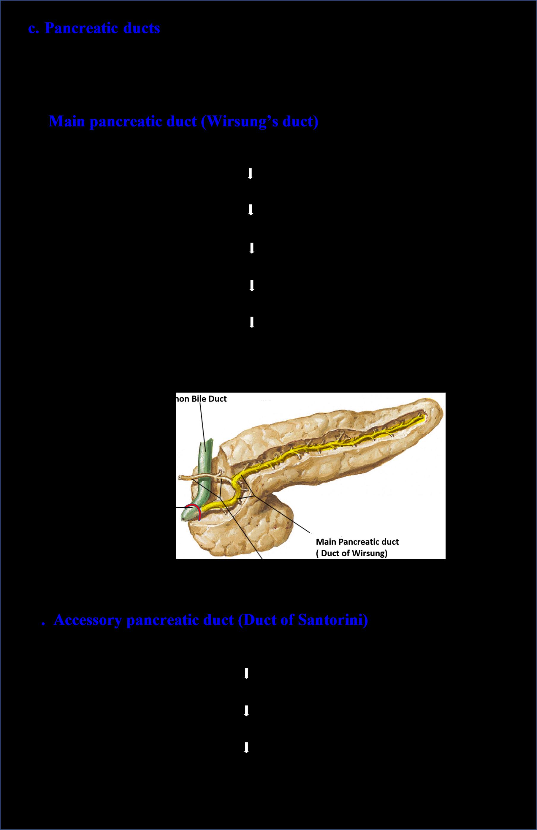 Pancreatic divisum anatomy